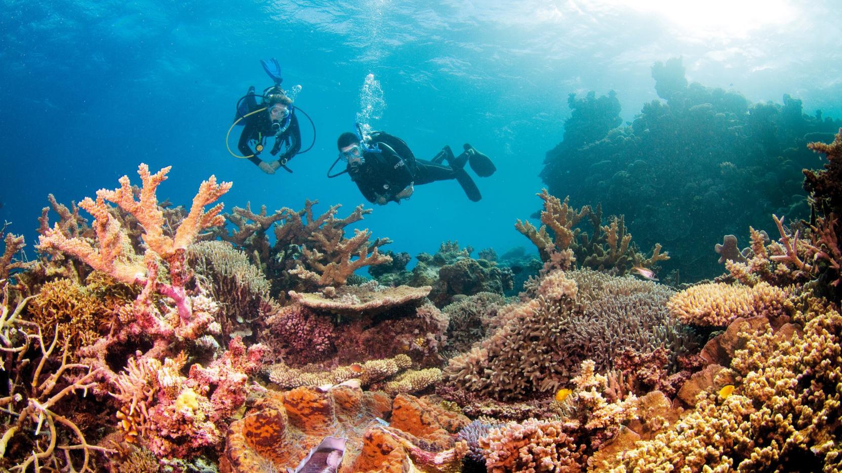 La Gran Barrera de Coral australiana se resiste a morir pese al cambio  climático | Revista Enfoque